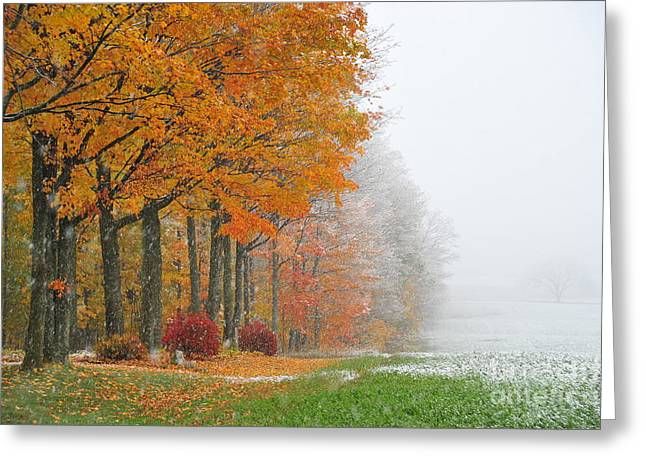 Autumn Landscape Greeting Cards - Snow in Autumn 5 Greeting Card by Terri Gostola
