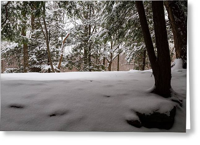 Snow in Shade  Greeting Card by Tim  Fitzwater