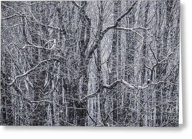 Winter Scene Photographs Greeting Cards - Snow in the Forest Greeting Card by Diane Diederich