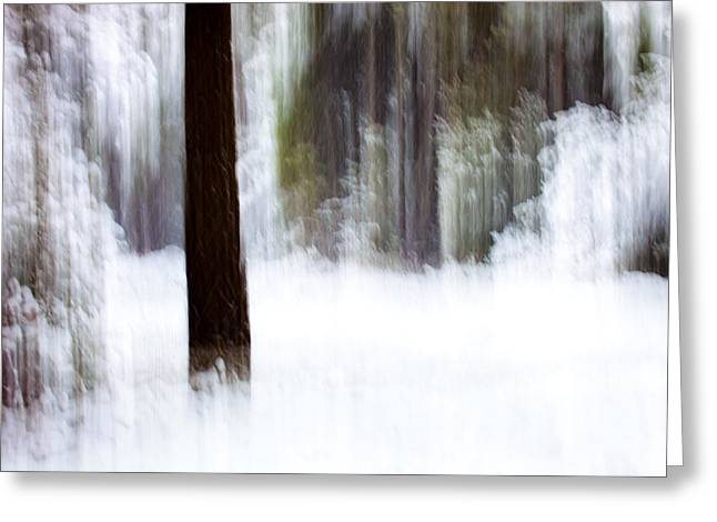 Blured Greeting Cards - Snow in the Forest Greeting Card by Marc Garrido