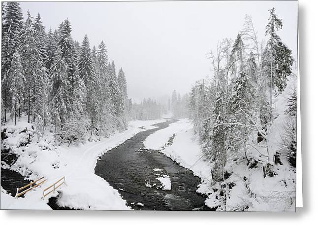 Snow-covered Landscape Greeting Cards - Snow Landscape - Trees and river in winter Greeting Card by Matthias Hauser