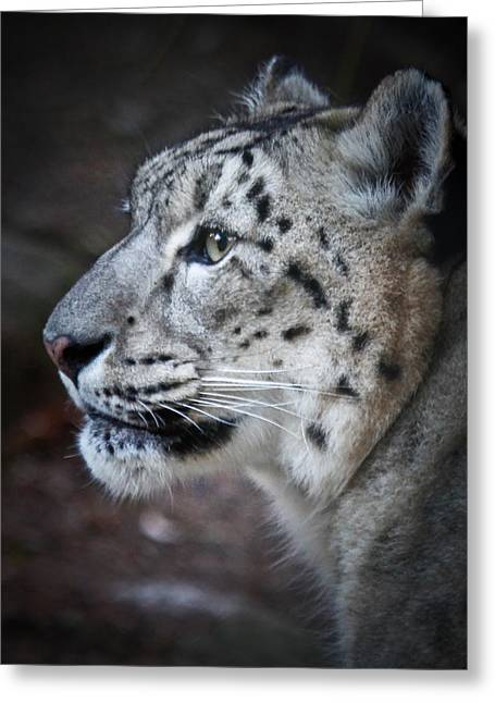Bobcats Greeting Cards - Snow Leopard Greeting Card by Athena Mckinzie