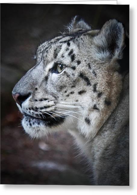 Bobcat Greeting Cards - Snow Leopard Greeting Card by Athena Mckinzie