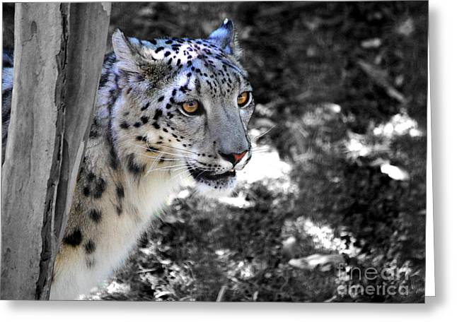 Cat Photographs Greeting Cards - Snow Leopard I Greeting Card by Jai Johnson