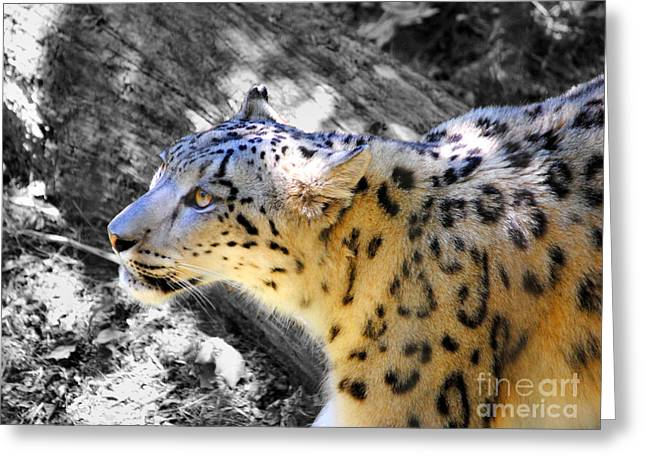 Cat Photographs Greeting Cards - Snow Leopard III Greeting Card by Jai Johnson