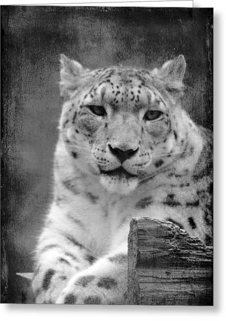 Cat Photographs Greeting Cards - Snow Leopard Greeting Card by Linda Sannuti