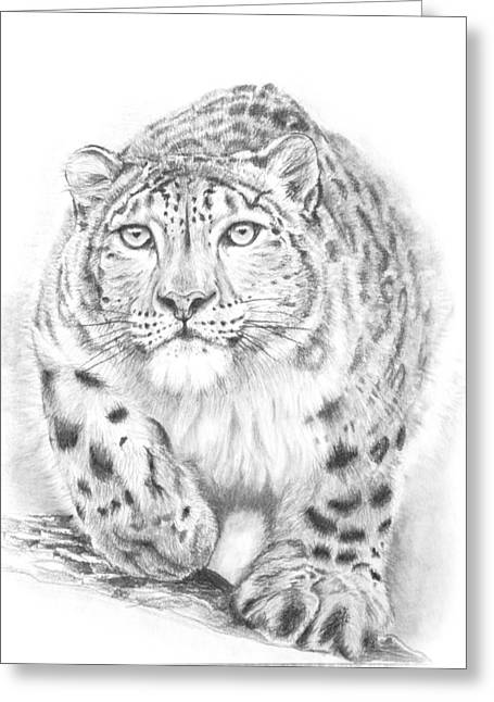 Wild Life Drawings Greeting Cards - Snow Leopard Greeting Card by Parampreet Grewal