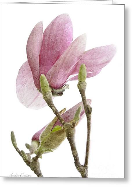 Pink Flower Branch Greeting Cards - Snow Magnolia Painterly 1 Greeting Card by Andee Design