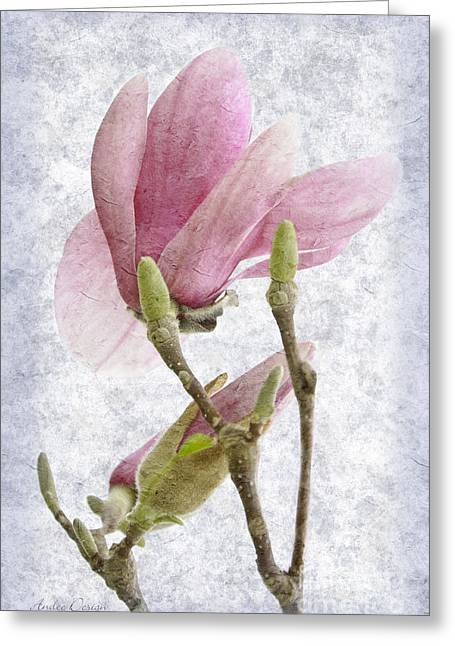 Pink Flower Branch Greeting Cards - Snow Magnolia Painterly 2 Greeting Card by Andee Design