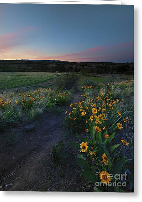 Ranch Greeting Cards - Snow Mountain Trail Greeting Card by Mike  Dawson