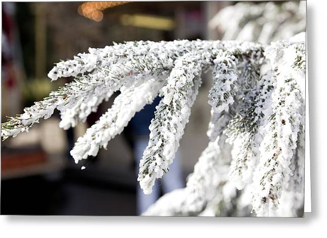 Evergreen With Snow Greeting Cards - Snow On A Branch Greeting Card by Pati Photography