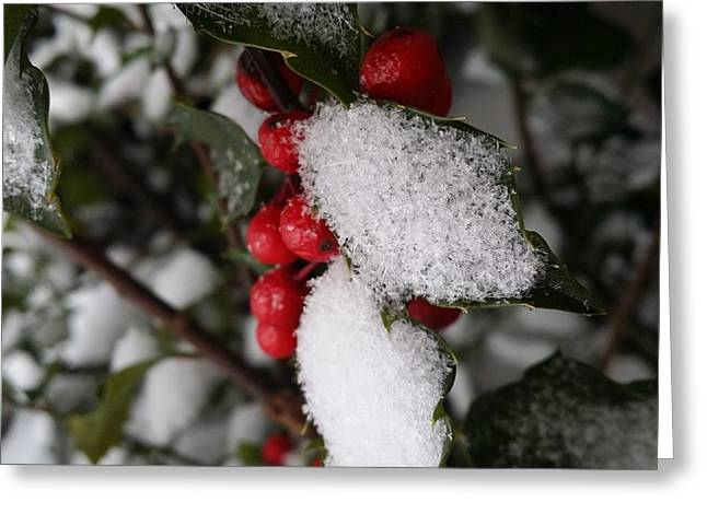 Snow On Holly Greeting Card by V P Holmes