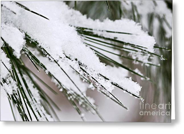 Winter Park Greeting Cards - Snow on pine needles Greeting Card by Elena Elisseeva