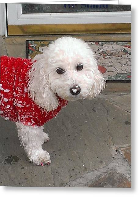 Dog Sweaters Greeting Cards - Snow on the Nose Greeting Card by Heather Ashley