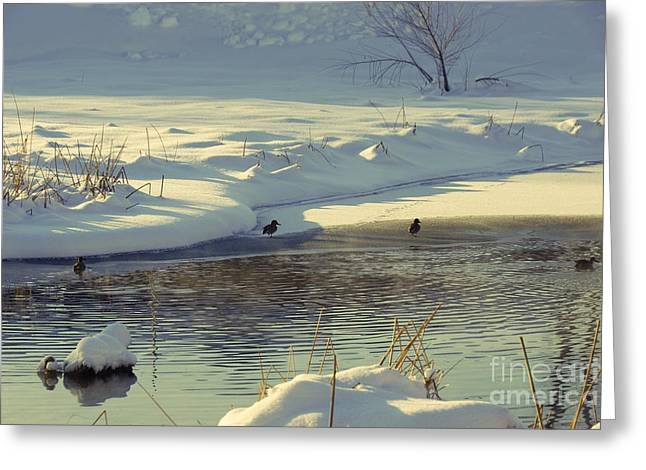 Snowy Day Greeting Cards - Snow on the Pond Greeting Card by Gloria Pasko