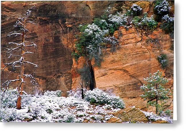 Cold Day Greeting Cards - Snow On Trees Greeting Card by Panoramic Images