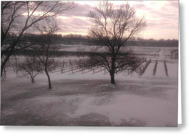 Hall Vineyards Greeting Cards - Snow on Vineyard Greeting Card by Larry Hall