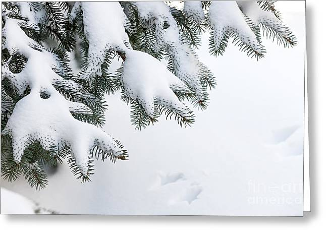 Wintry Greeting Cards - Snow on winter branches Greeting Card by Elena Elisseeva