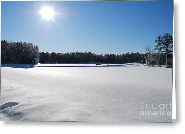 Snow Scene Landscape Greeting Cards - Snow Over Cranberry Bogs in New England Greeting Card by DejaVu Designs