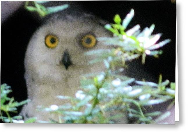 Origional Greeting Cards - Snow Owl Greeting Card by Gunter  Hortz