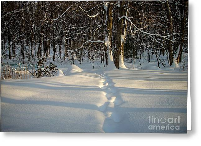 Randi Shenkman Greeting Cards - Snow Path Greeting Card by Randi Shenkman