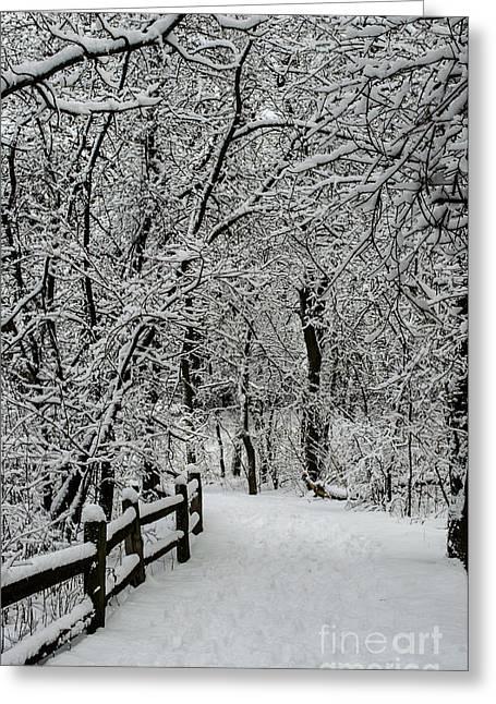 Winter Storm Nemo Greeting Cards - Snow Path Through Nemo Aftermath Greeting Card by Deborah Smolinske