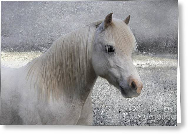Lone Horse Greeting Cards - Snow Pony Greeting Card by Linda Lees