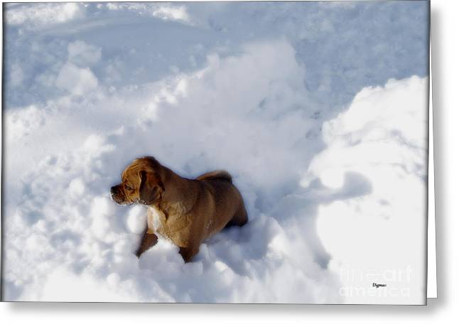 Puppy Digital Greeting Cards - Snow Puggles  Greeting Card by Steven  Digman
