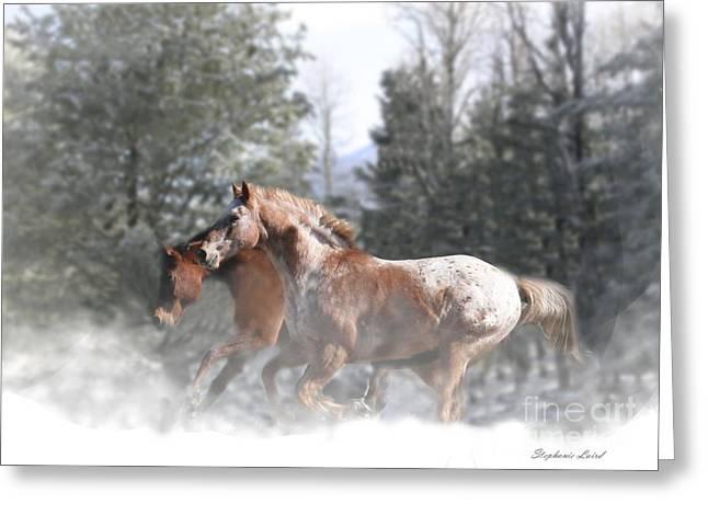 Snow Run Greeting Card by Stephanie Laird