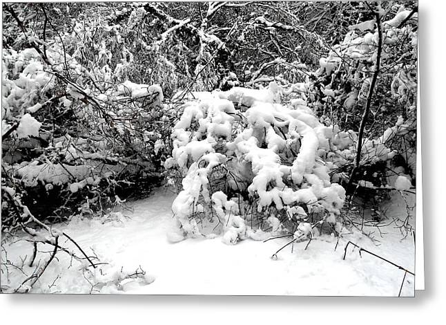 Snow Tree Prints Greeting Cards - Snow Scene 1 Greeting Card by Patrick J Murphy