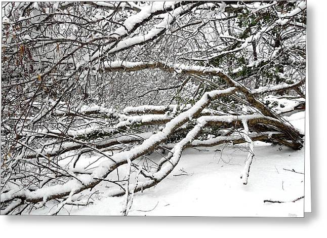 Snow Tree Prints Greeting Cards - Snow Scene 2 Greeting Card by Patrick J Murphy