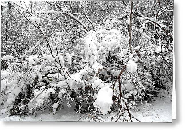Snow Tree Prints Greeting Cards - Snow Scene 4 Greeting Card by Patrick J Murphy