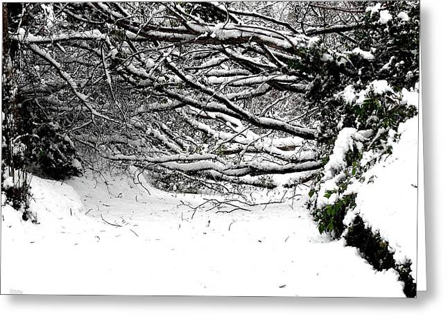 Snow Tree Prints Greeting Cards - Snow Scene 5 Greeting Card by Patrick J Murphy