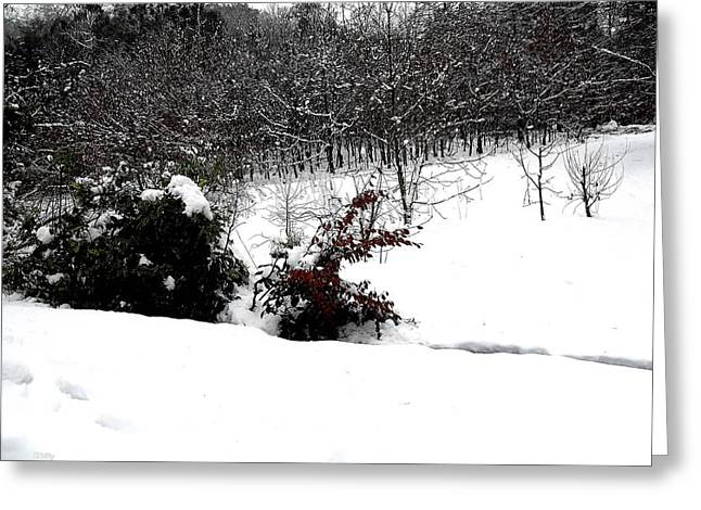 Snow Tree Prints Greeting Cards - Snow Scene 6 Greeting Card by Patrick J Murphy