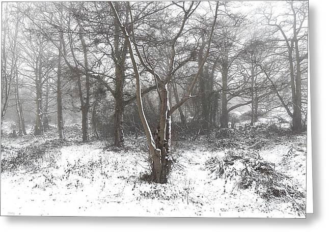 SNOW SCENE 7 Greeting Card by Patrick J Murphy