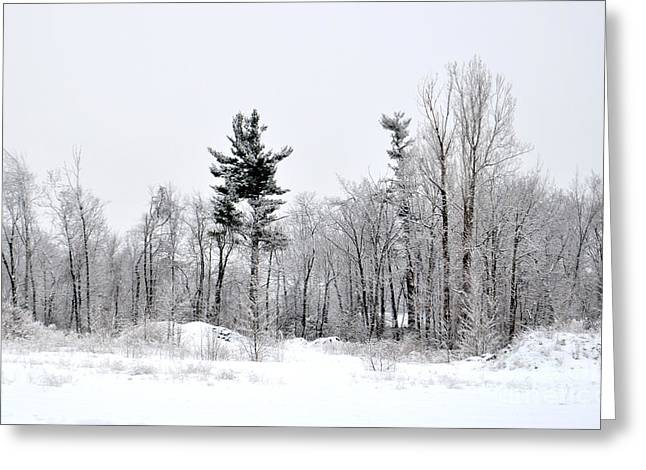 Wintry Greeting Cards - Snow Scene in New England Greeting Card by Staci Bigelow