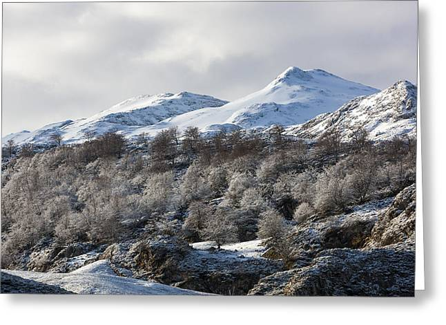 Snow-covered Landscape Greeting Cards - Snow Greeting Card by Sebastian Wasek
