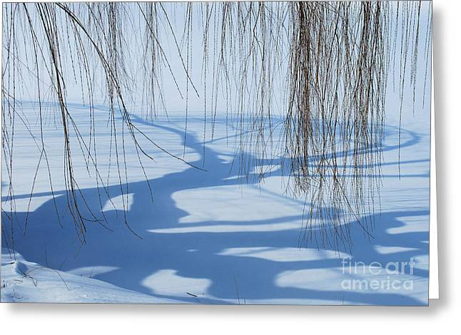 Chicago Botanic Garden Greeting Cards - Snow Shadows I Greeting Card by Nancy Mueller