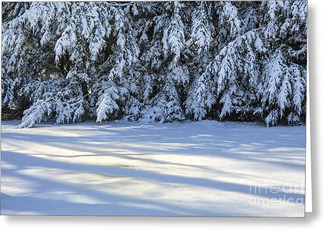 Evergreen With Snow Greeting Cards - Snow Shadows Greeting Card by Rick Bragan