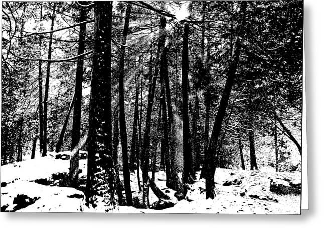 Cedar Key Greeting Cards - Snow Shower Greeting Card by Debbie Oppermann