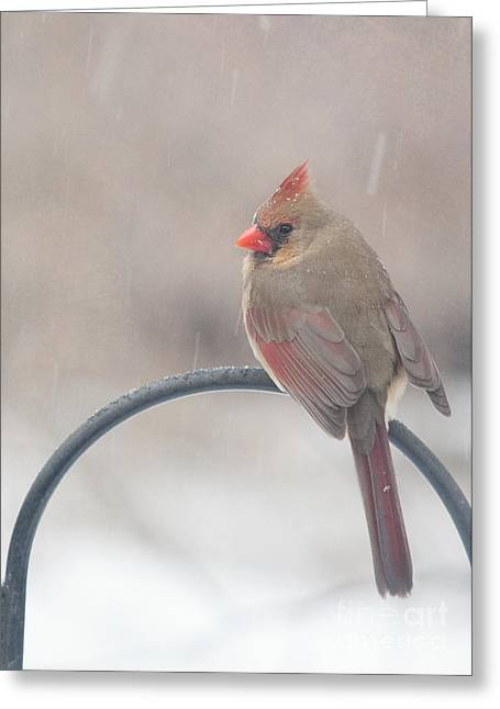 Red Bird In Snow Greeting Cards - Snow Shower Greeting Card by Kay Pickens