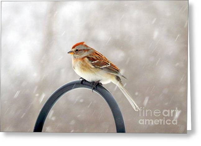 Wintry Greeting Cards - Snow Sparrow Greeting Card by Karen Cook