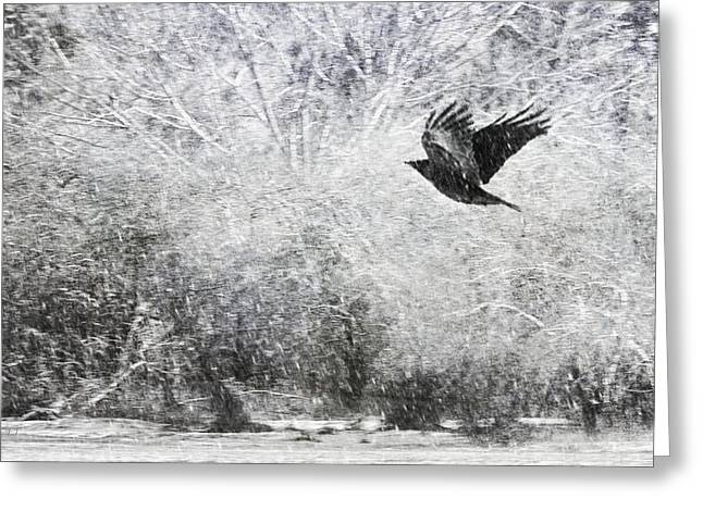 Winter Crows Greeting Cards - Snow Storm With Crow Greeting Card by Theresa Tahara