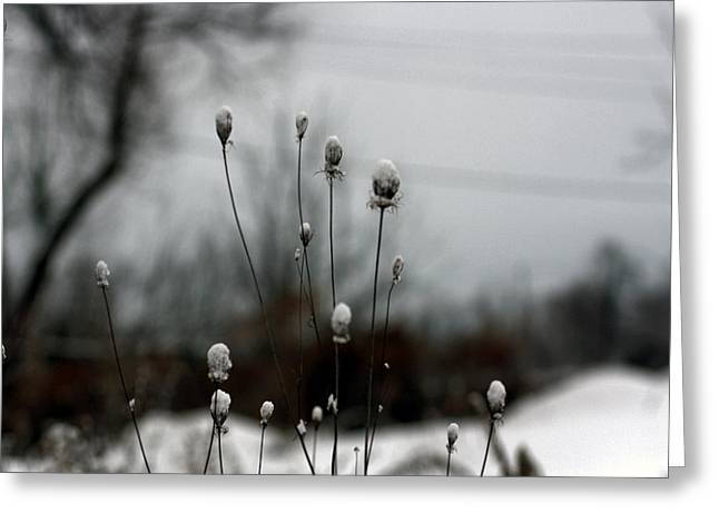 Winter Scene Digital Art Greeting Cards - Snow Tops Greeting Card by Gothicolors Donna Snyder