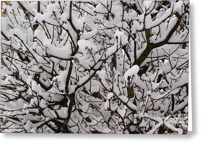 Rural Snow Scenes Photographs Greeting Cards - Snow tree Greeting Card by Carol Lynch
