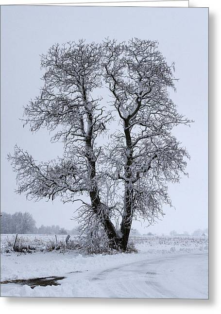 Menard Greeting Cards - Snow Tree Greeting Card by Eric Mace