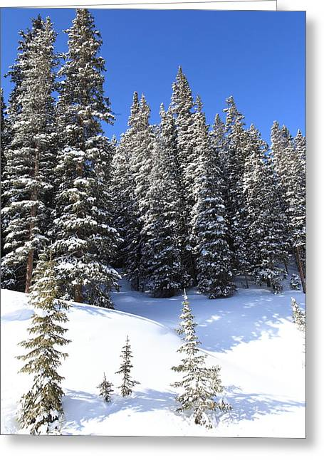 White River Greeting Cards - Snow Trees Greeting Card by Eric Glaser