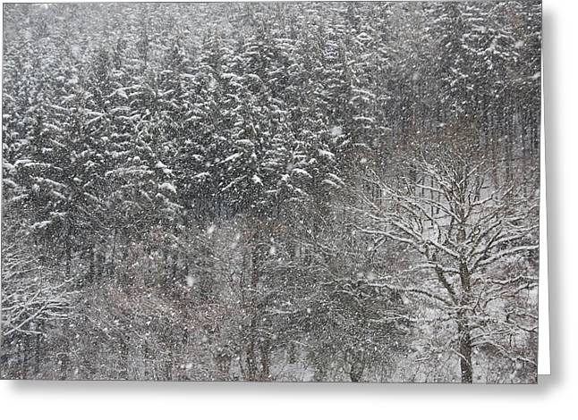 Snow Greeting Cards - Snow Trees Landscape Greeting Card by Gina Dsgn