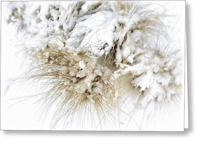 Snow Covered Ground Greeting Cards - Snow Whiskers Greeting Card by Julie Palencia