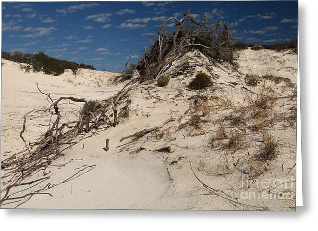 St Joseph Peninsula State Park Greeting Cards - Snow White Dunes Greeting Card by Adam Jewell